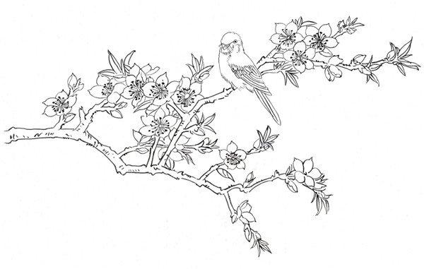 白描海棠花鸟作品欣赏
