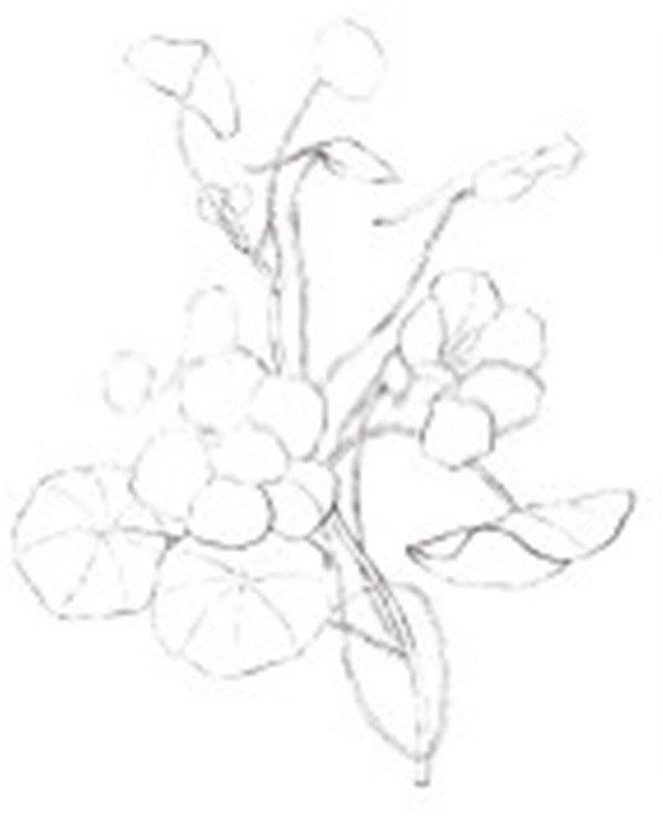 简笔图案设计橘花