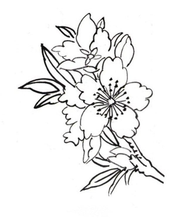 白描迎春花鸟图片欣赏 2图片