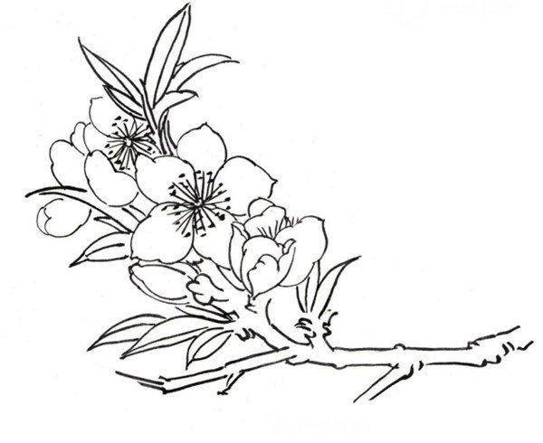 白描迎春花鸟图片欣赏