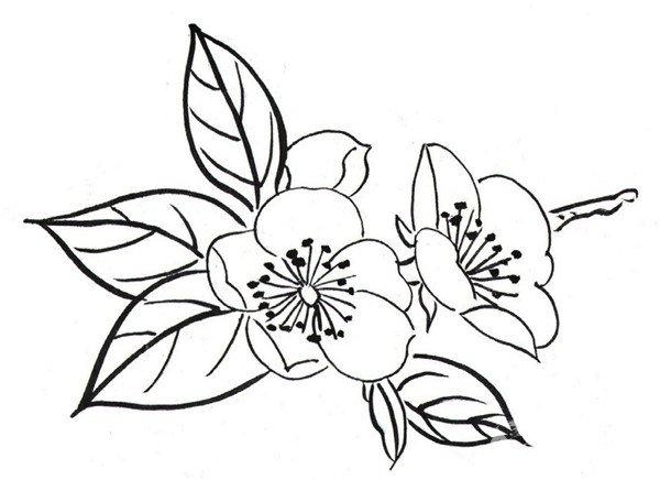 白描腊梅和鸟的绘画步骤 2