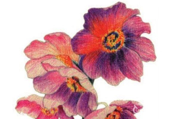 水粉花卉画入门:绿绒蒿的绘画步骤教程