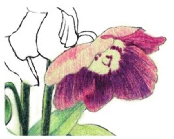 水粉花卉画入门:绿绒蒿的绘画步骤教程(4)