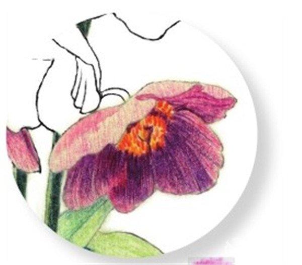 水粉花卉画入门 绿绒蒿的绘画步骤教程 4