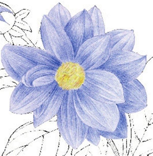 水粉花卉画入门:水粉大丽花的绘画步骤教程(5)