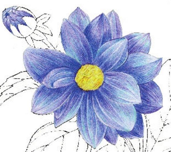 水粉花卉画入门:水粉大丽花的绘画步骤教程(6)