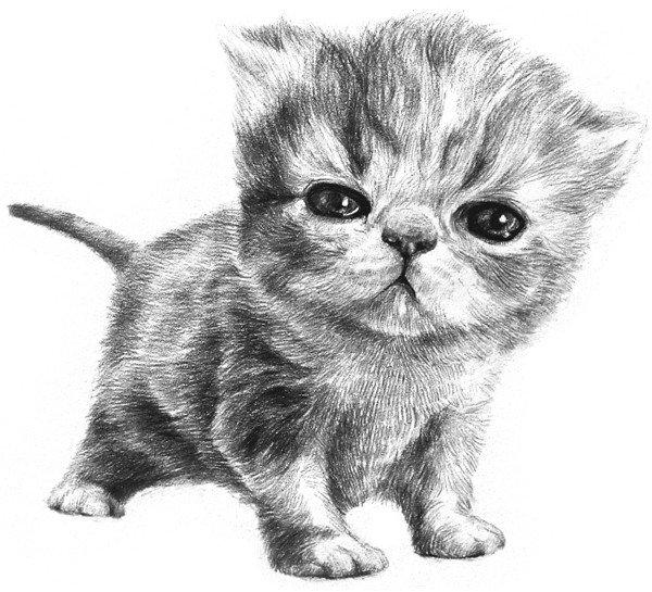 素描动物小猫咪的绘画步骤教程