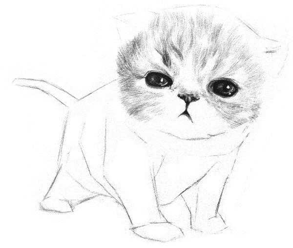素描动物小猫咪的绘画步骤教程(3)
