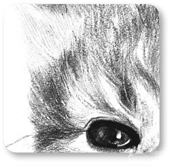 素描动物小猫咪的绘画步骤教程(3)_素描教程_学画画