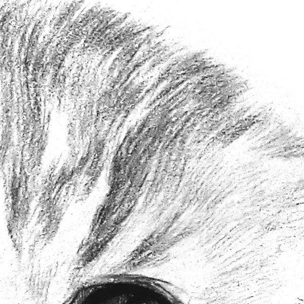 素描小猫咪的绘画步骤七-2 8,小猫身上的毛是从