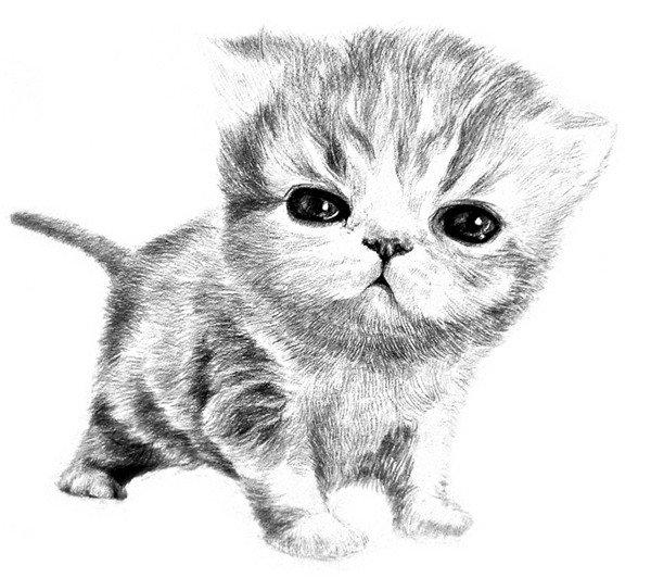 素描动物小猫咪的绘画步骤教程(6)_素描教程_学画画