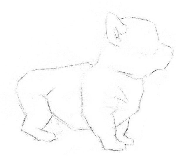 素描小狗的绘画步骤教程一-素描动物入门 素描小狗的绘画教程图片