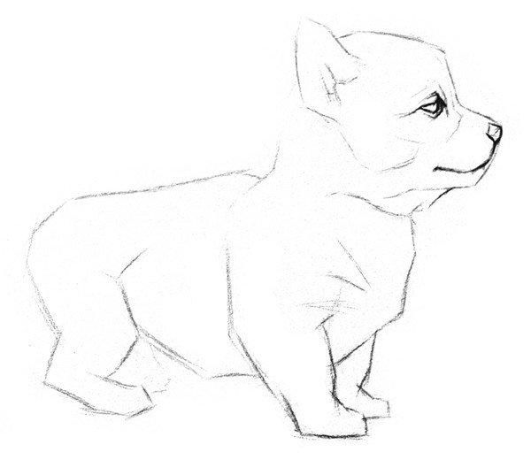 素描动物入门:素描小狗的绘画教程