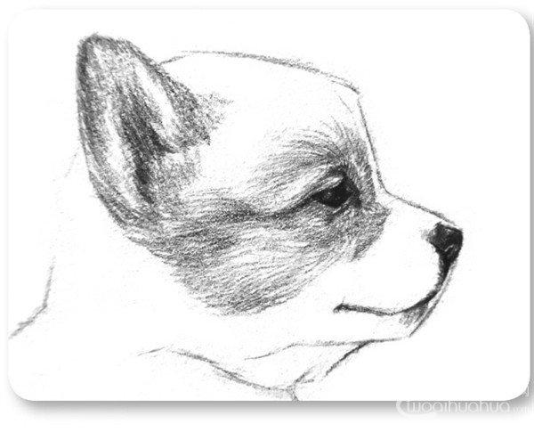 小狗的绘画教程(2)图片