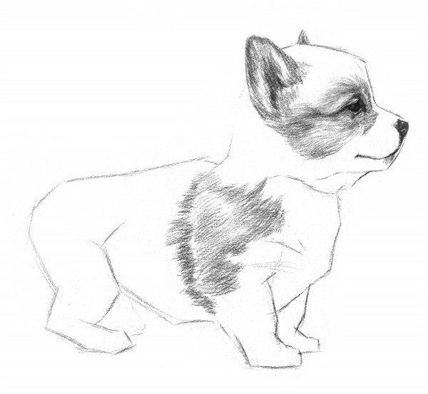 3、用之前的方法刻画出小狗的眼珠子,从眼睛向外沿着毛发的生长方向排线。  素描小狗的绘画步骤教程三 4、继续往外延伸。耳朵上的线从耳根向耳尖方向绘制,接近边缘的地方用笔轻一点,同时加深鼻尖。  素描小狗的绘画步骤教程四 5、小狗前腿和肩部的毛色比较深,所以从这里开始画。同样沿着毛发的生长方向来绘制,线条稍有些弯曲,就像小狗的自然毛发一样。  素描小狗的绘画步骤教程五