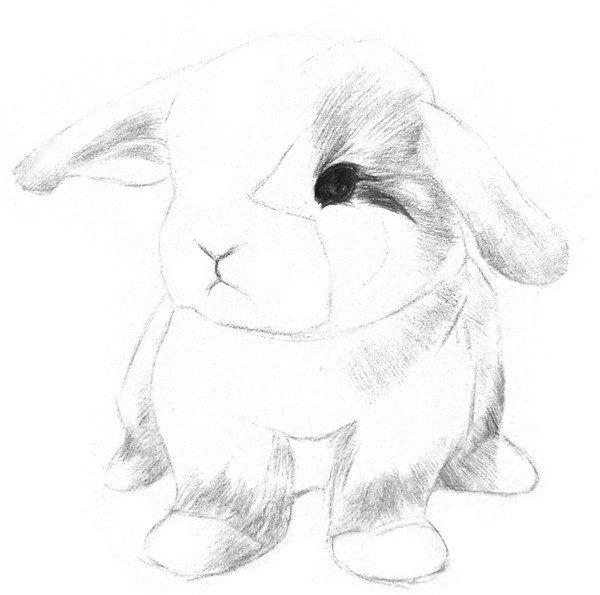 学画画 素描教程 素描动物 > 素描动物入门:素描小兔子的绘画步骤(2)
