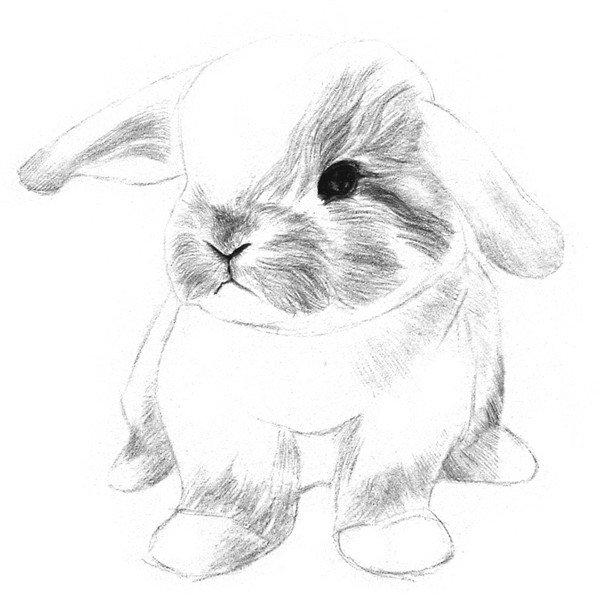 素描动物入门:素描小兔子的绘画步骤(3)_素描教程_学