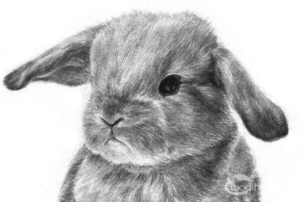 简笔画兔子图片大全,儿童简笔画兔子卡通图片(2)