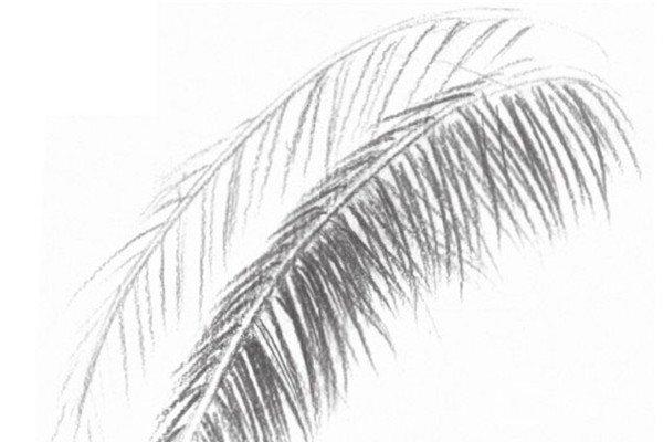 素描花生入门绘画教程(3)图片