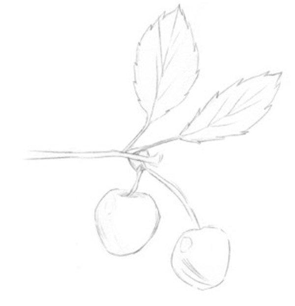 静物素描:小樱桃枝的绘画步骤
