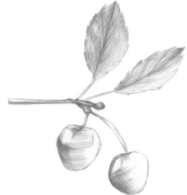 静物素描:小樱桃枝的绘画步骤(2)