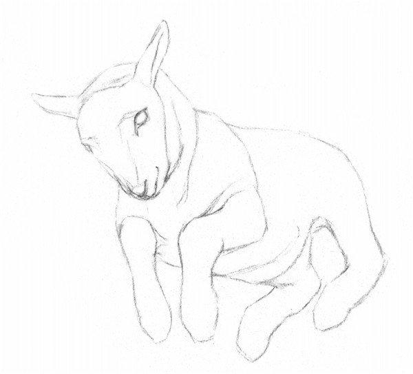 素描动物小羊的画法