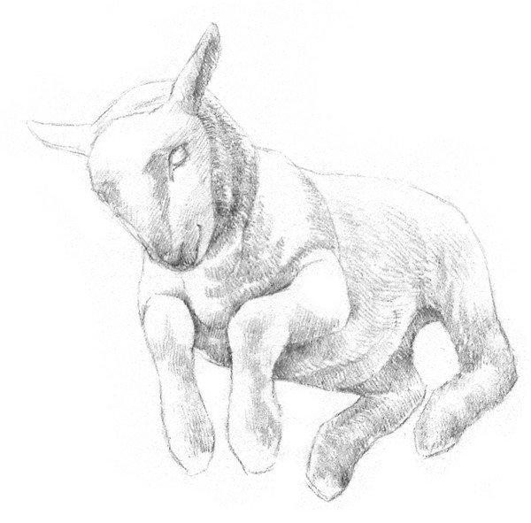 素描动物小羊的画法(2)