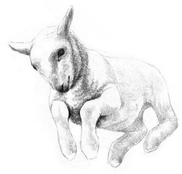 北京画室_素描动物小羊的画法