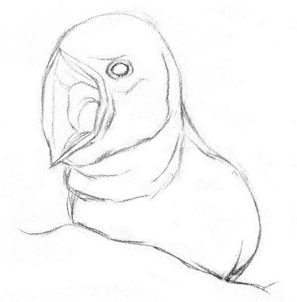 素描小燕子绘画步骤
