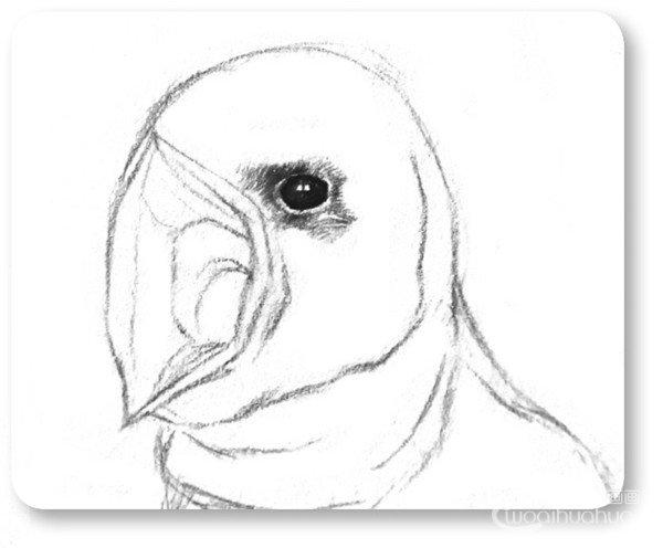 眼珠和眼眶交界的地方再描黑一遍,眼睛周围的绒毛也一并画一下.