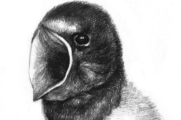 笔素描画,各种动物彩色钢笔画图片欣赏 12
