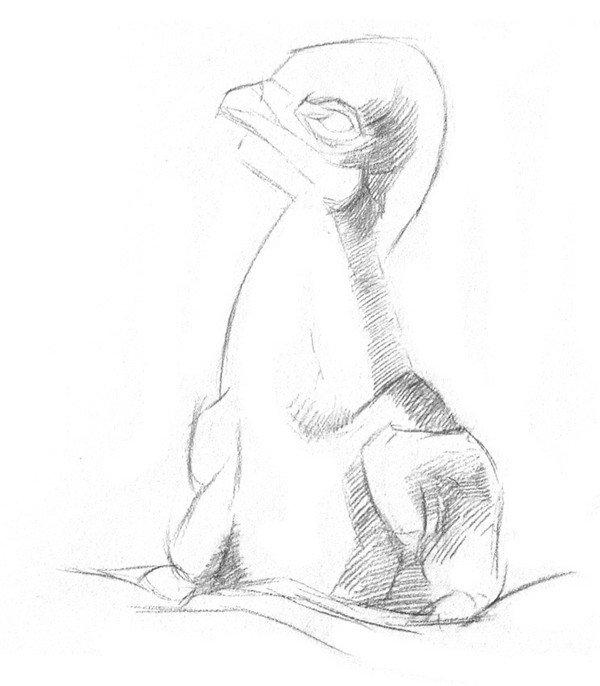 素描动物小鹰的技法步骤教程(2)