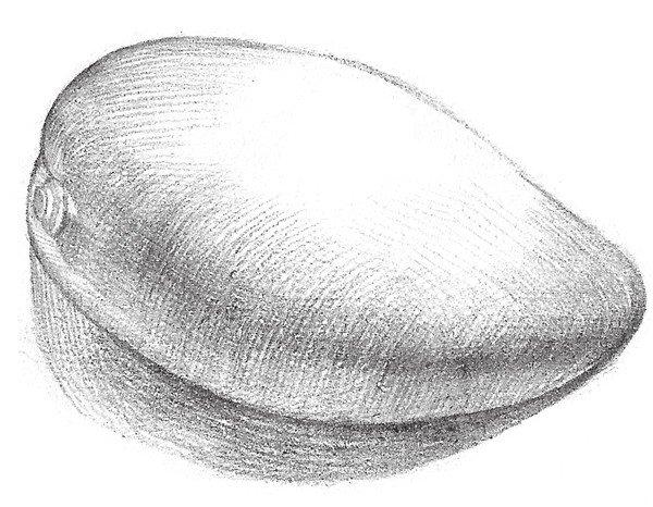 静物素描芒果的绘画步骤