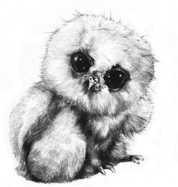 素描小猫头鹰的绘画步骤 1,打出小猫头鹰的大概轮廓,粗略区分出头部