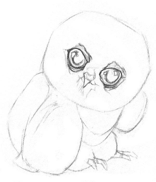 素描小猫头鹰的绘画步骤三