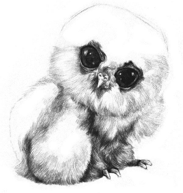 学画画 素描教程 素描动物 > 素描小猫头鹰绘画教程(4)     7,在下半