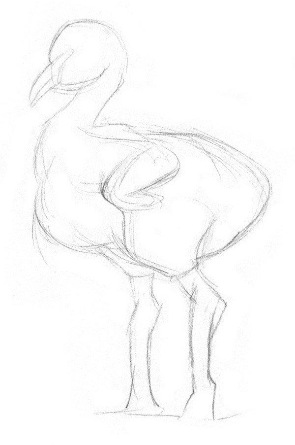 素描小火烈鸟的绘画步骤一