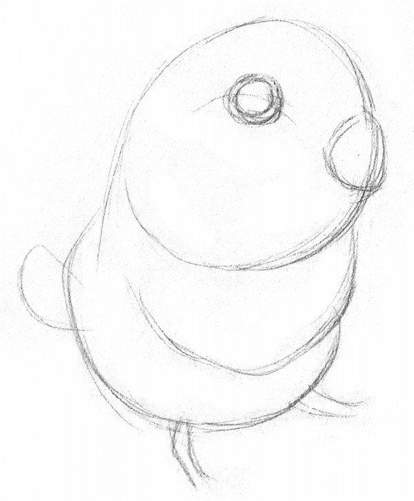 素描鹦鹉的绘画步骤一