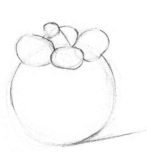 素描山竹的绘画步骤二