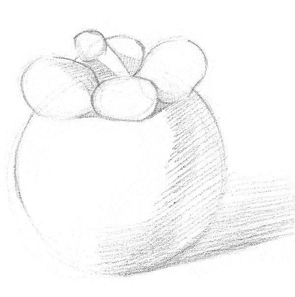 山竹的绘画步骤(2)