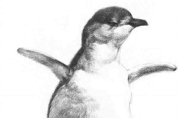 1、轻轻地打形,用比较松散的线条表现出小火烈鸟的头、颈、身体、翅膀和长腿。  素描小火烈鸟的绘画步骤一 2、用一根细线精确描绘出身体的轮廓,为身体上几个体积变化的地方添加几根结构辅助线。  素描小火烈鸟的绘画步骤二