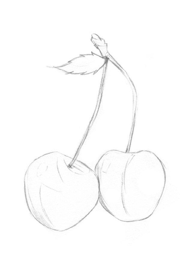 素描樱桃的绘画技法(2)