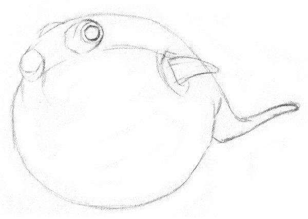 素描动物小河豚的绘画步骤教程