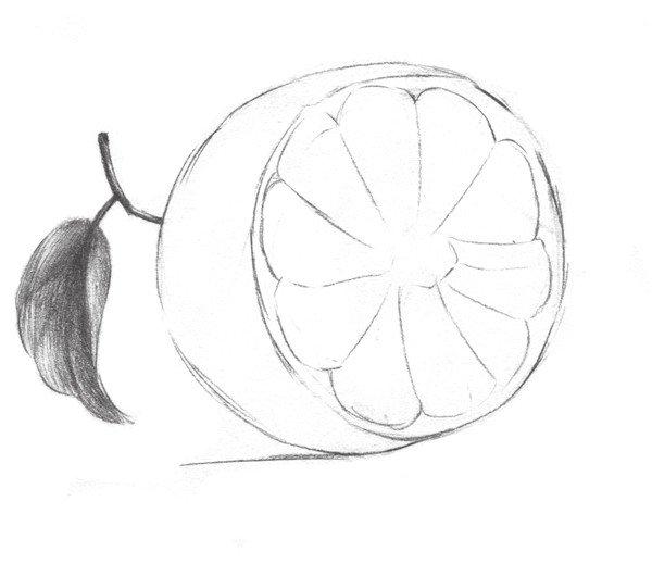 素描橙子叶子纹理图片