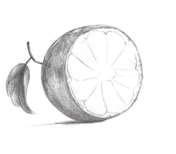 素描橙子的绘画步骤四