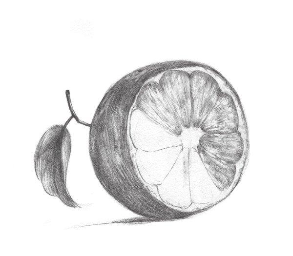 素描橙子的绘画步骤五