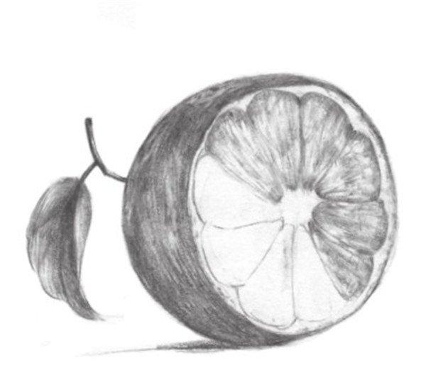 学画画 素描教程 静物素描 > 素描橙子的绘画教程(3)      5,画出叶子