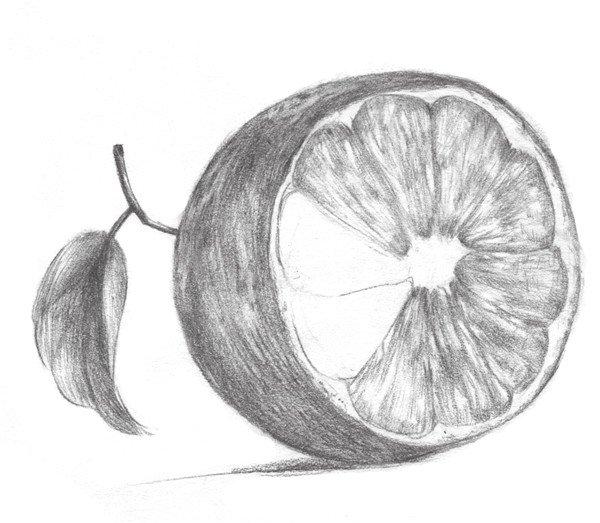 素描橙子叶子形状变化图片