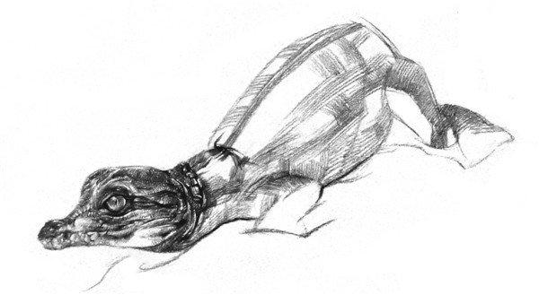 素描小鳄鱼绘画步骤六