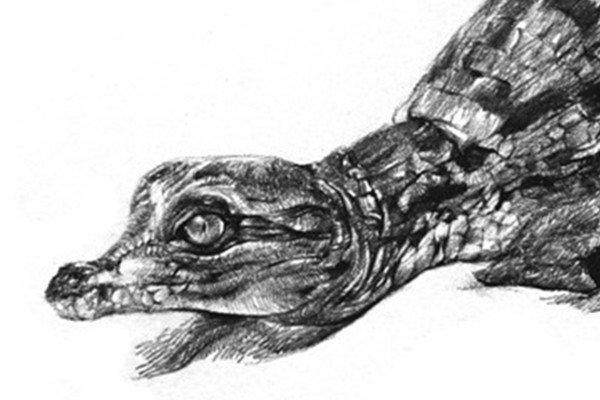 素描小鳄鱼的绘画技法